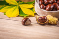 Horse Chestnut Stock Photography - 45658962