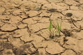 Desert Plant Drought Dry Ground Stock Photography - 45662042