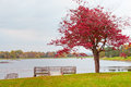 Lonely Autumn Tree Near Lake On Overcast Day. Stock Photo - 45688710