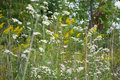Wild White Aster Flowers And Goldenrods Stock Images - 45689144