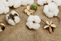 Cotton Balls Stock Photography - 45700072