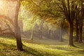 Ray Of Light Through The Trees In The Misty Morning Stock Photo - 45723690