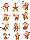 Cute Monkeys In Various Expression Stock Images - 45727274