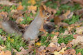 Squirrel With A Nut Stock Images - 45729964