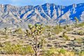 Joshua Trees And The Grand Wash Cliffs, Meadview, Arizona Royalty Free Stock Image - 45763066