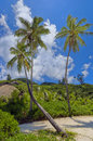 Tropical Island Nature Royalty Free Stock Images - 4583619