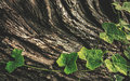 Bark And Leaf Royalty Free Stock Images - 45806879