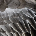 Bird Wing Detail Texture Royalty Free Stock Images - 45823179