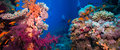Colorful Underwater Reef With Coral And Sponges Stock Images - 45847934