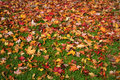 Fall Leaves On Lawn Royalty Free Stock Photo - 45870745