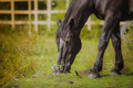Horse, Horse S Neck, The Horse In The Summer, Royalty Free Stock Images - 45871959