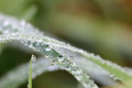 Dew Drops On Grass Macro Stock Images - 45896754