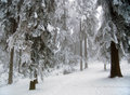 Winter Scene Royalty Free Stock Photo - 4598235