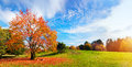 Autumn, Fall Landscape. Tree With Colorful Leaves Stock Photography - 45908332