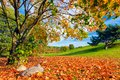 Autumn, Fall Landscape. Tree With Colorful Leaves Stock Photo - 45908650