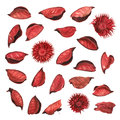 Red Dried Flower Leaves Potpourri Royalty Free Stock Photography - 45908937