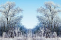 Winter Background With Icy Branches In The Foreground Stock Photos - 45938833