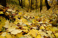 Yellow Fallen Leaves On The Ground Royalty Free Stock Images - 45939889