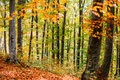 Autumn Forest Landscape Royalty Free Stock Images - 45951559
