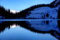 Lonely Swan After First Snowfall On The Lake Royalty Free Stock Photo - 45953025