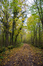 Country Road In Fall Colors Royalty Free Stock Photo - 45970055