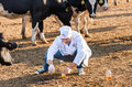 Veterinarian At  Farm Cattle Stock Images - 45975104
