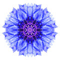 Blue Cornflower Mandala Flower Kaleidoscope Isolated On White Royalty Free Stock Photography - 45976607