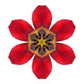 Red Kaleidoscopic Lily Flower Mandala  Isolated On White Royalty Free Stock Images - 45976619