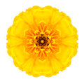 Yellow Concentric Marigold Mandala Flower Isolated On White Stock Images - 45976654