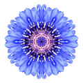 Blue Cornflower Mandala Flower Kaleidoscope Isolated On White Royalty Free Stock Photos - 45976658