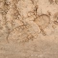 Shoe Step Left In The Sand Royalty Free Stock Image - 45983956