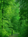 Man In A Green Forest Royalty Free Stock Photo - 464335