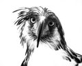 ME Eagle Stare Royalty Free Stock Image - 46025616