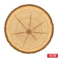 Cross Section Of Tree Trunk. Vector. Stock Photos - 46027733