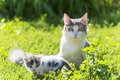 The Cat Is Playing With A Kitten On  Green Grass Royalty Free Stock Photography - 46095447