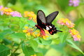 Butterfly And Flower Royalty Free Stock Images - 46096289