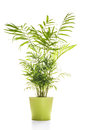 House Plant Isolated On White Royalty Free Stock Photos - 46158538