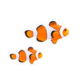 Clown Fish Royalty Free Stock Images - 46165929