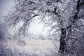 First Snow Stock Images - 46175554