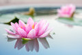 Waterlily Or Lotus Flower In Pond Stock Photos - 46191373