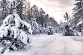 Snowy Forest Stock Images - 46191874