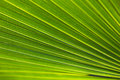 Green Leaf Royalty Free Stock Images - 4630069