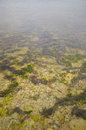 Detail Of Underwater Landscape Royalty Free Stock Photos - 4631258