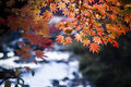 Autumn Leaves Beside The Water Stock Photography - 46303972