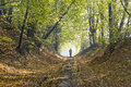Autumn Forest Road Stock Photo - 46322680