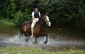 Horseback Riding In Nature Royalty Free Stock Photography - 46335387