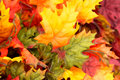 Fall Colors Home Decorations - Leaves Royalty Free Stock Photo - 46390305