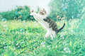 Kitten And Soap Bubbles Royalty Free Stock Images - 46406139