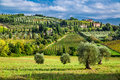 Olive Trees And Vineyards In A Small Village In Tuscany Stock Photos - 46412603