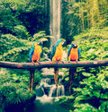 Blue-and-Yellow Macaw Stock Photos - 46419063